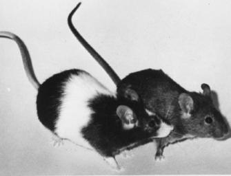 Funktioniert Ökonomie mit Moral? Oder: Was ist eine Maus schon wert?